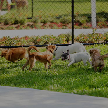 Large Dog Park at Monarch Apartments